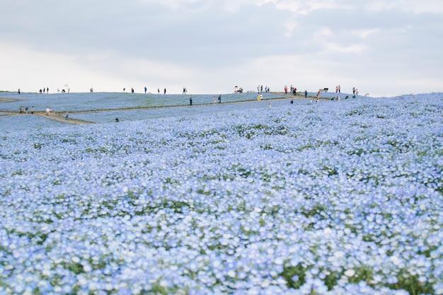 Scena del parco balneare di hitachi Foto Gratuite