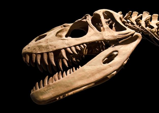 Scheletro di dinosauro su sfondo nero isolato Foto Premium