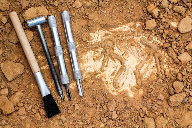 Scheletro e strumenti archeologici Foto Premium