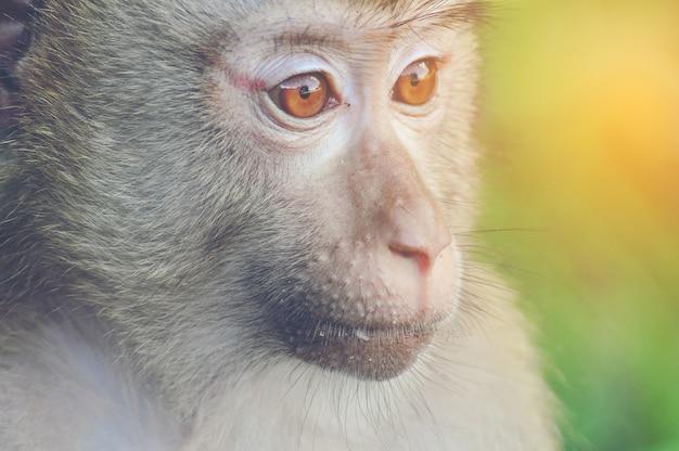 Scimmia selvaggia, close-up Foto Premium