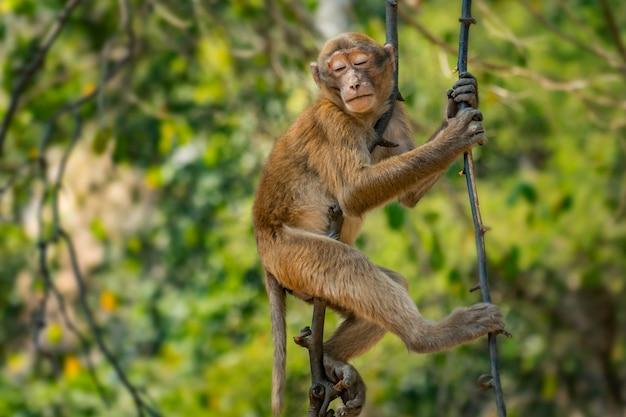 Scimmia sull'albero che dorme nella foresta Foto Premium