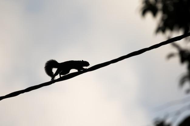 Scoiattolo in fretta sopra una corda Foto Premium