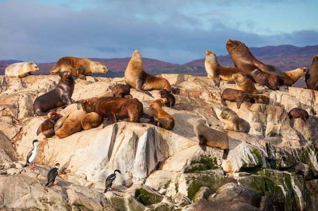 Seal island vicino a ushuaia Foto Premium