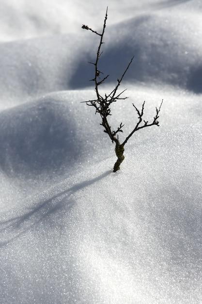 Secco ramo solitario albero metafora neve inverno dune deserto Foto Premium