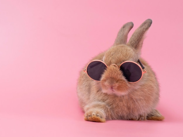 Seduta da portare di vetro del coniglio sveglio marrone-rosso del bambino. Foto Premium