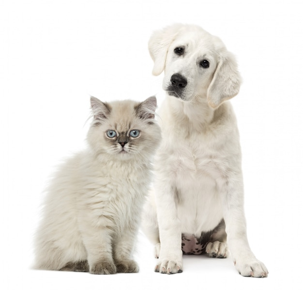 Seduta del cane e del gatto isolata su bianco Foto Premium