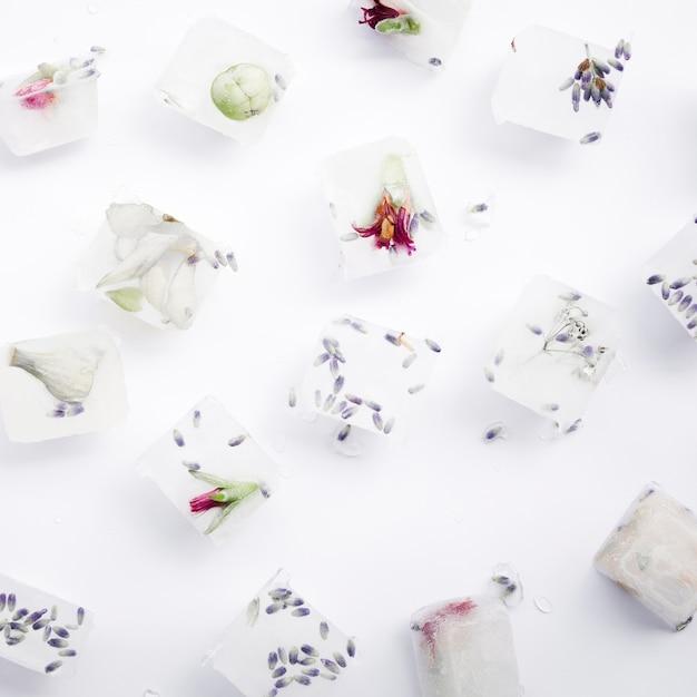 Semi e fiori in cubetti di ghiaccio Foto Gratuite