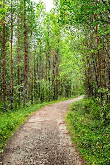 Sentiero nella fitta foresta. verticale. Foto Premium