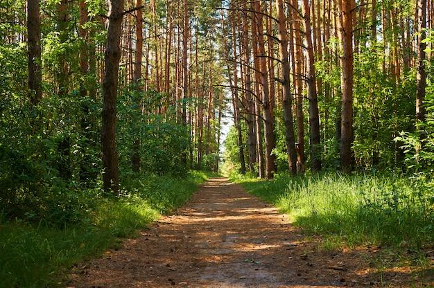 Sentiero per le persone nella foresta verde. Foto Premium