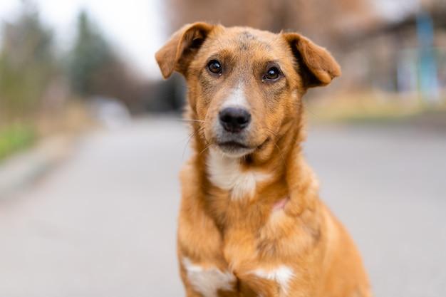 Senzatetto cane seduto sulla strada. Foto Premium