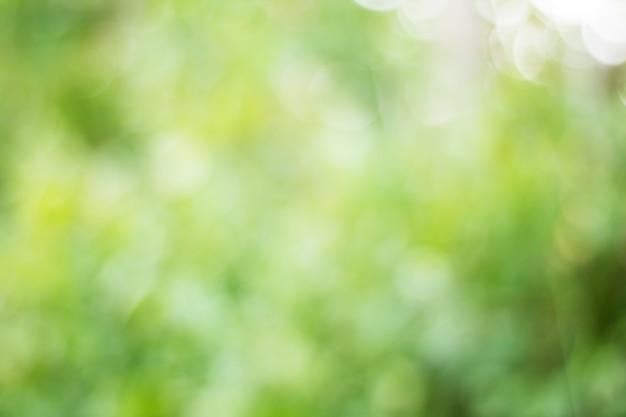 Sfocatura delle foglie di albero per lo sfondo della natura Foto Premium