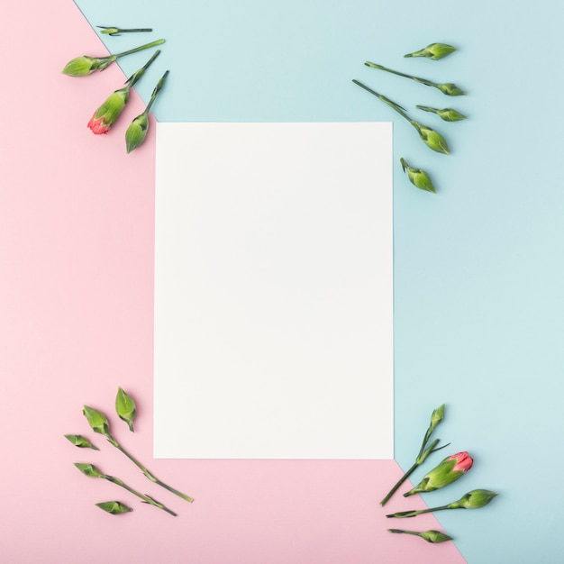 Sfondo a contrasto con carta bianca vuota e fiori di garofano Foto Gratuite