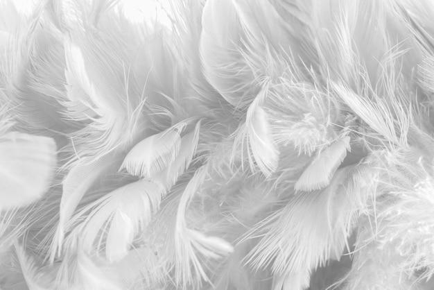 Sfondo astratto uccelli e polli piuma trama Foto Premium