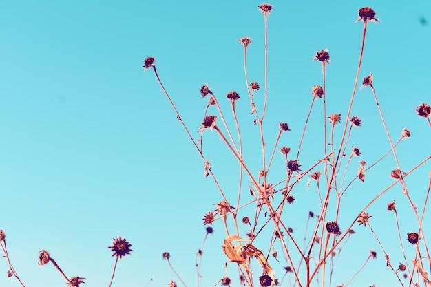 Sfondo blu con fiori vintage Foto Premium