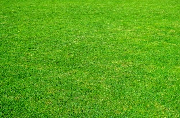 Sfondo del campo di erba verde. modello e struttura dell'erba verde. prato verde per lo sfondo. Foto Premium