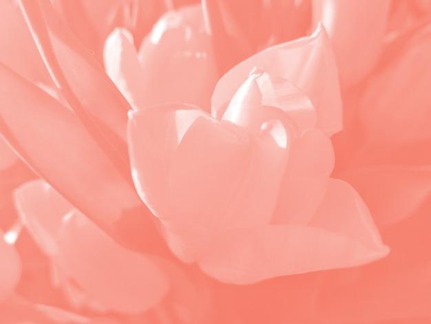 Sfondo di fiori tonica Foto Premium
