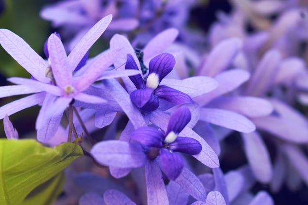 Sfondo Di Fiori Viola Scaricare Foto Premium