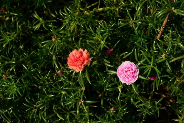 Sfondo di fiori. Foto Premium