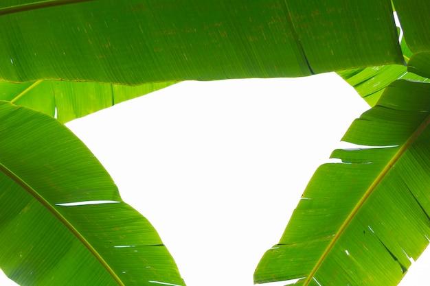 Sfondo di foglie di banana verde, foresta. Foto Gratuite