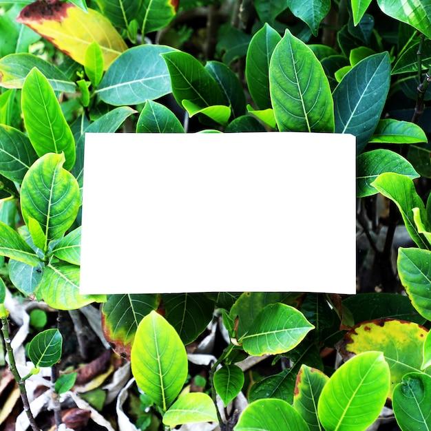 Sfondo di foglie giardino natura Foto Premium