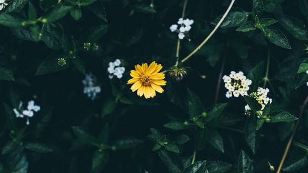 Sfondo di foglie verdi con piccolo fiore giallo piccolo; Foto Premium