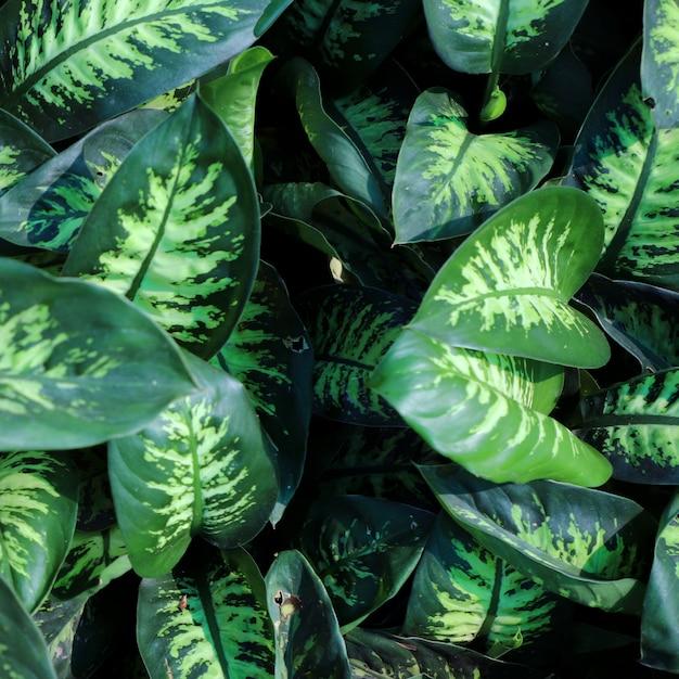 Sfondo di foglie verdi di natura Foto Gratuite