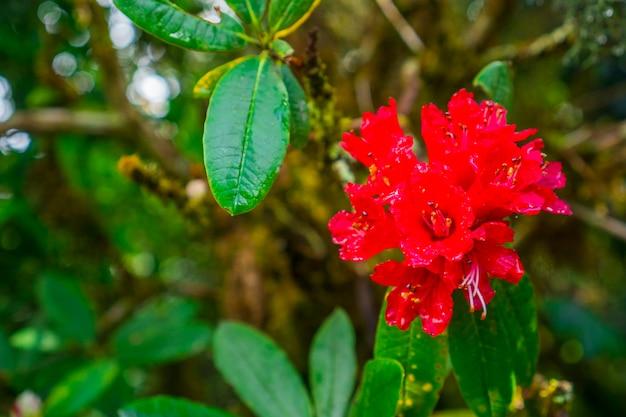 sfondo di giardinaggio floreale con variet di fiori da