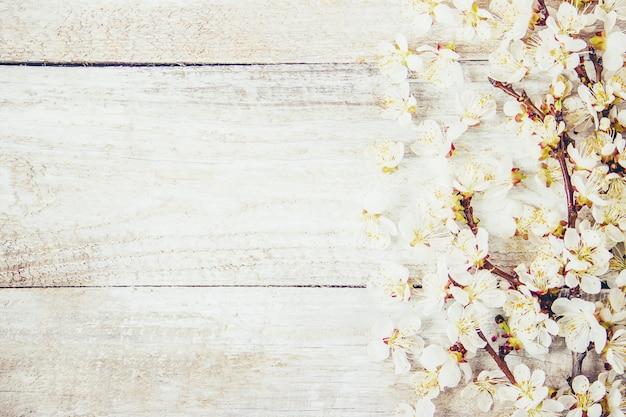 Sfondo di primavera, fiori e tè. messa a fuoco selettiva Foto Premium