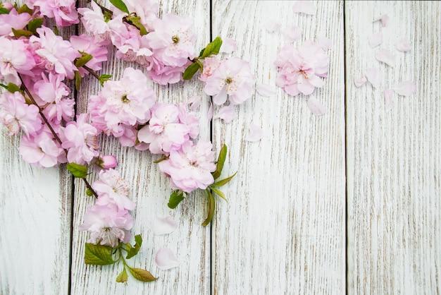 Sfondo di primavera sakura blossom Foto Premium