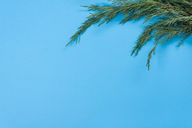 Sfondo di rami di ginepro. sfondo blu, copia spazio, vista dall'alto Foto Premium