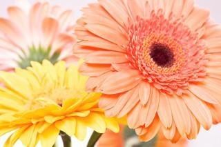 Sfondo Fiore Di Primavera Scaricare Foto Gratis