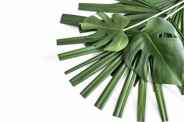 Sfondo, foglie tropicali diversi su sfondo bianco Foto Gratuite
