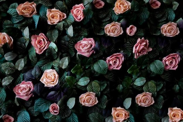 Sfondo muro di fiori con incredibili rose rosa e corallo Foto Gratuite