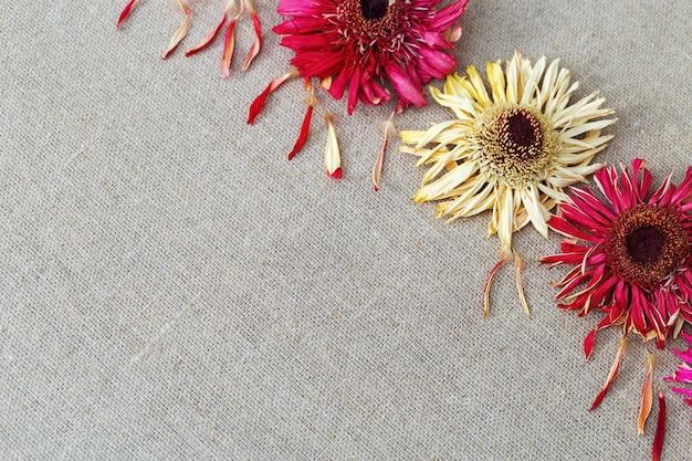 Sfondo naturale con la gerbera dei fiori asciutti sul panno di tela. copyspace per il testo. Foto Premium