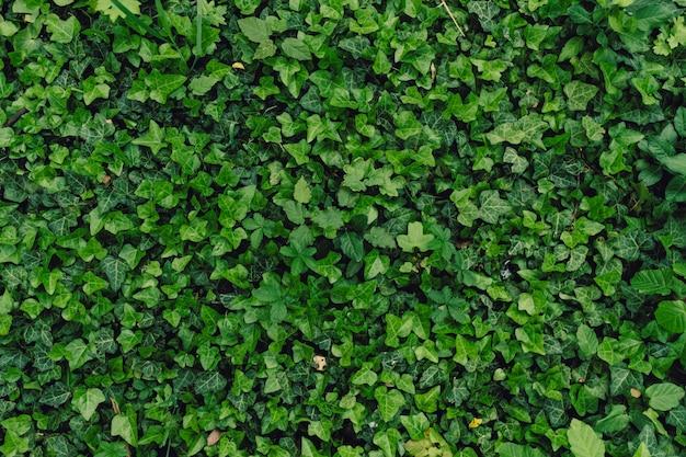 Sfondo naturale strutturato di molte foglie verdi Foto Gratuite
