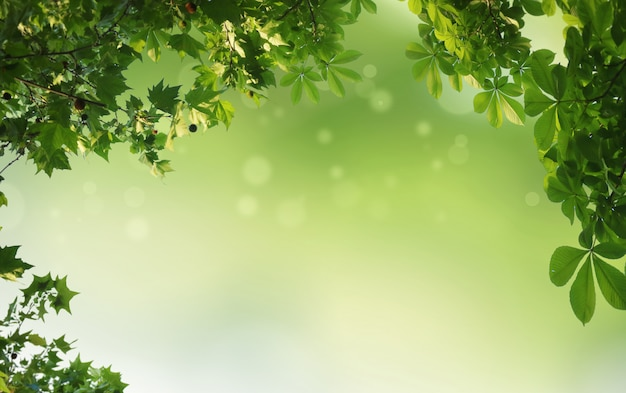 Sfondo naturale verde, sfondo verde Foto Premium