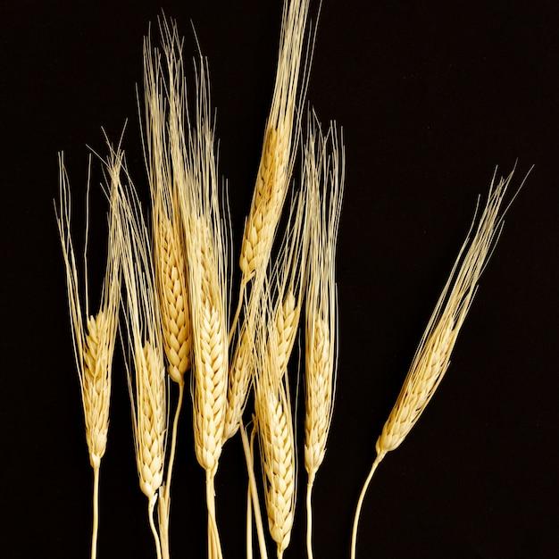 Sfondo nero con grano Foto Gratuite