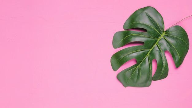 Sfondo rosa con foglia Foto Gratuite