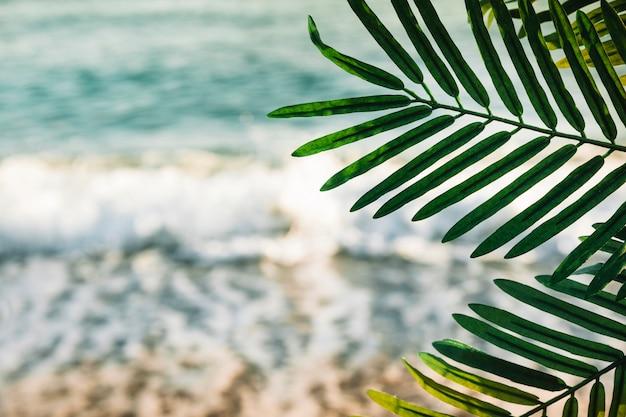 Sfondo spiaggia con foglia di palma Foto Gratuite