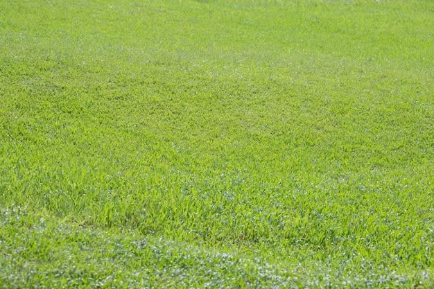 Sfondo Verde Erba Sfondo Verde Campo Scaricare Foto Premium