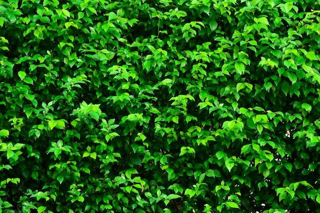 Sfondo Verde Foglia Scaricare Foto Premium