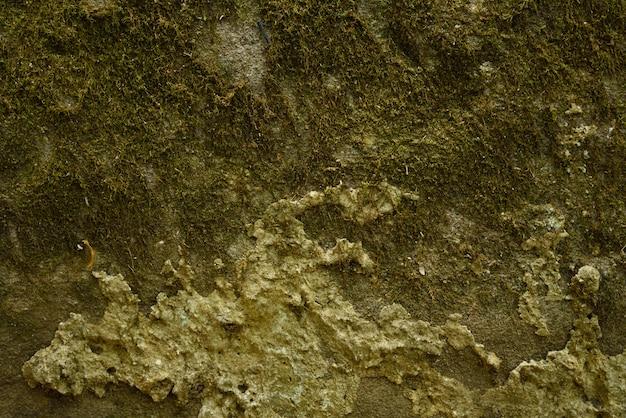 Sfondo verde muschio Foto Premium
