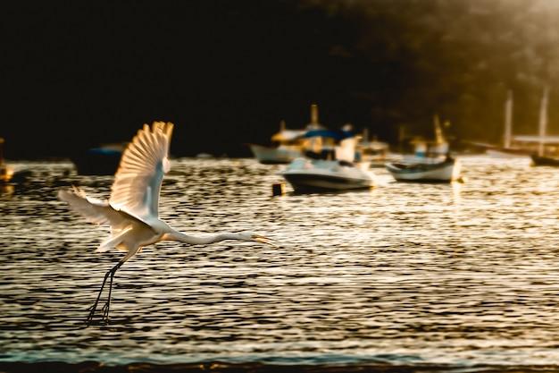 Silhouette di blue heron in spiaggia all'alba Foto Premium
