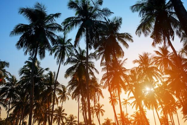 Siluetta degli alberi del cocco sull'insieme variopinto del sole Foto Premium