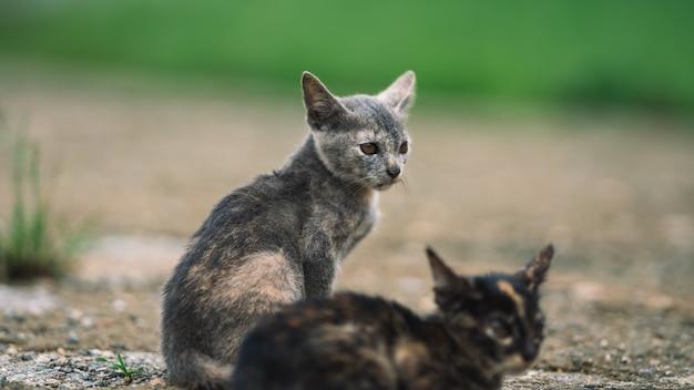 Simpatici gattini goffi Foto Premium