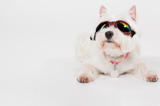 Simpatico cagnolino con gli occhiali Foto Gratuite