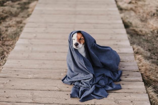 Simpatico cagnolino con mantello grigio. seduto sul pavimento di legno. concetto di autunno o inverno. all'aperto Foto Premium