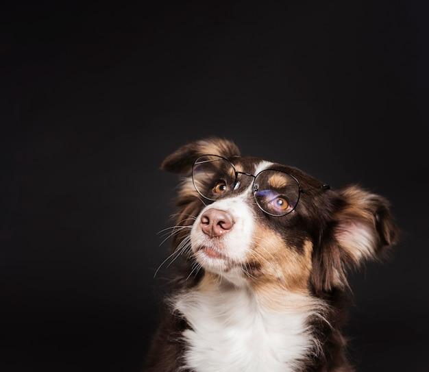Simpatico cane con gli occhiali Foto Gratuite