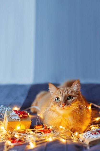 Simpatico gatto zenzero sdraiato nel letto con brillanti lampadine e regali di capodanno in carta artigianale. accogliente casa vacanze di natale. Foto Premium