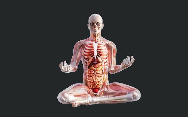 Sistema muscolo scheletro umano, sistema osseo e digerente con tracciato di ritaglio Foto Premium